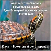День черепахи картинка прикольная