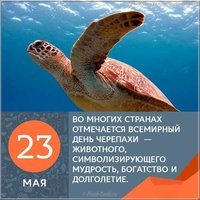 День черепахи картинка с цитатами