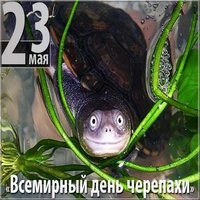 День черепахи картинка
