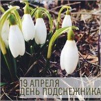 День подснежника 19 апреля картинка