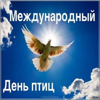 День птиц фото картинка
