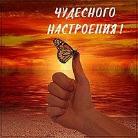 Картинка чудесного настроения с бабочками