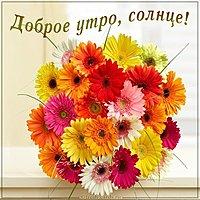 Картинка доброе утро солнце цветы