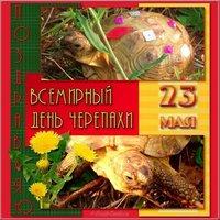 Картинка поздравление с днем черепахи