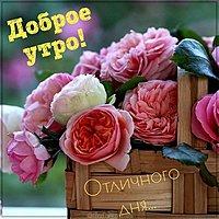 Картинка с добрым утром с цветами красивая