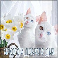 Картинка яркого и доброго дня кошечки