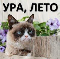 Котика вам в лето