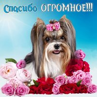 Милейшая собачка в цветочках