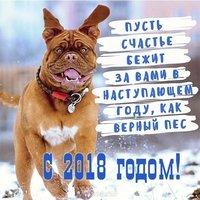 Новогодний прикол фото 2018