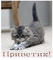 От милого котёнка приветик