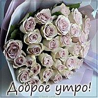 Открытка доброе утро с розами