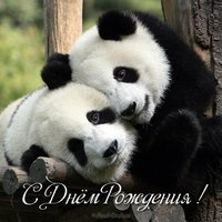 Открытка панда с днем рождения