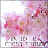 Открытка приятного дня и отличного настроения