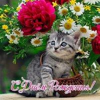 Открытка с днем рождения коты