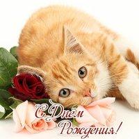 Открытка с днем рождения с котенком фото