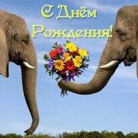 Открытка с днем рождения со слоном
