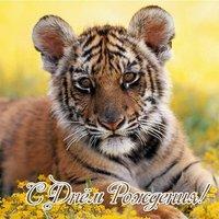 Открытка с днём рождения с тигром