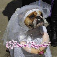Открытка с днём свадьбы прикольная смешная