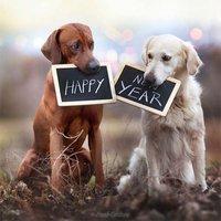 Открытка с новым годом 2018 собаки прикольная