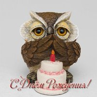Открытка с совой на день рождения