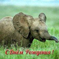 Открытка слон с днем рождения