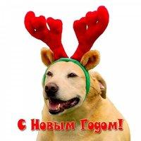 Прикольная открытка на год собаки