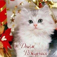 С днем рождения котенок открытка