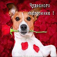 Виртуальная открытка чудесного настроения