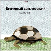 Всемирный день черепахи картинка