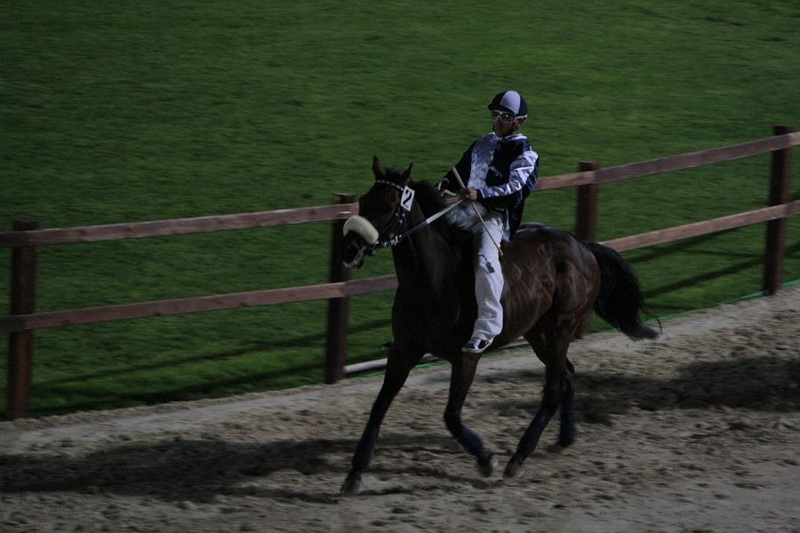 Andrea Ferraris sul cavallo Mago Blu