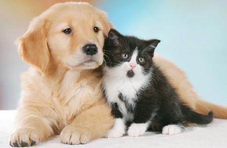 cani-e-gatti-vittime