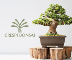 Crespi Bonsai 2016