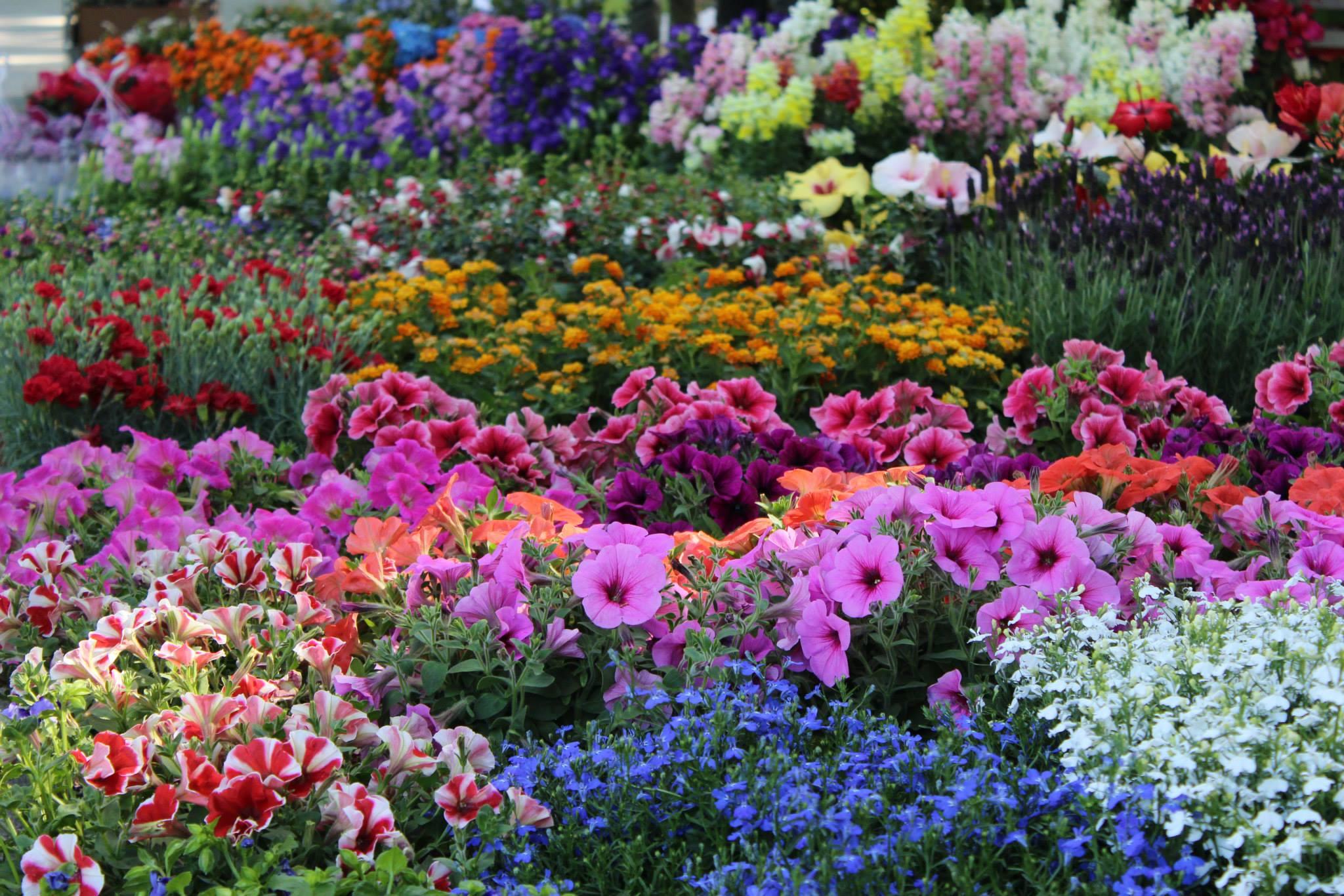 piante e fiori simboli e significati nella storia dell