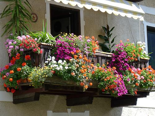 Prosegue la 2 edizione di balconi fioriti sempione news for Terrazzi con piante e fiori