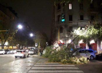 albero caduto a milano