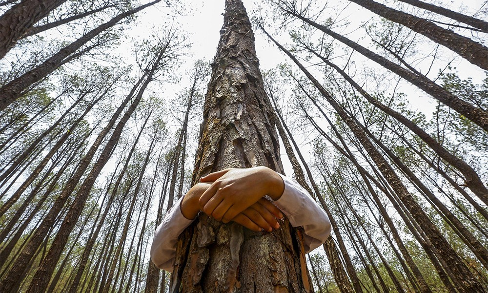 Risultato immagini per eo ipso pianta gli alberi