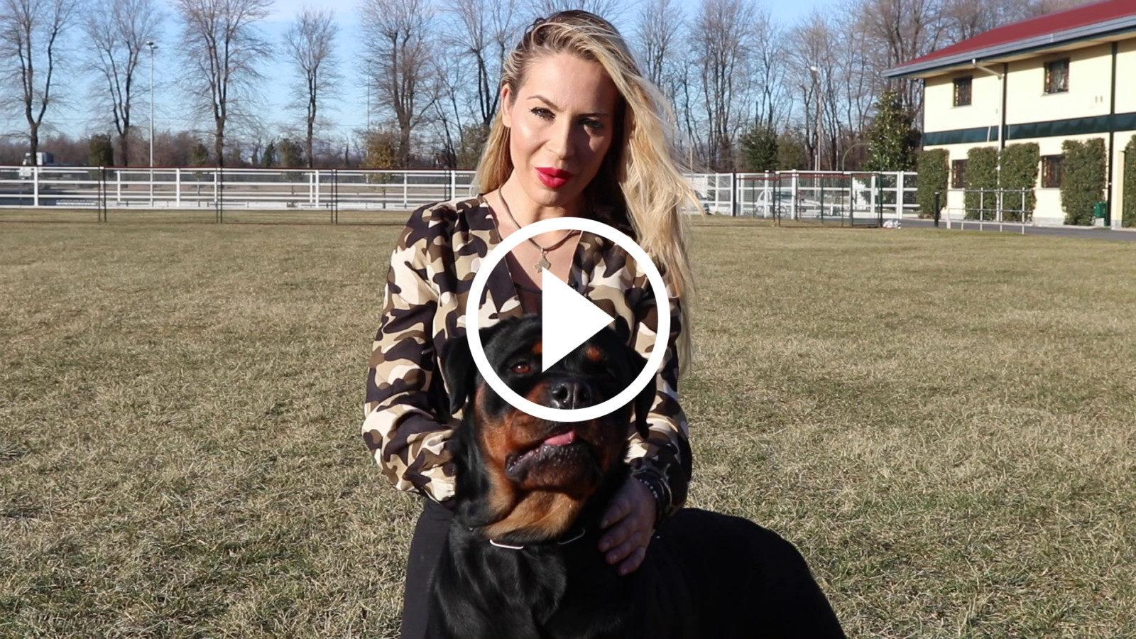 razza-Rottweiler-play