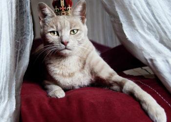 festival-dei-gatti2
