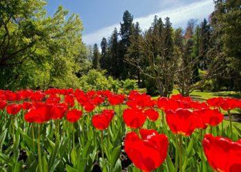 festa dei tulipani verbania
