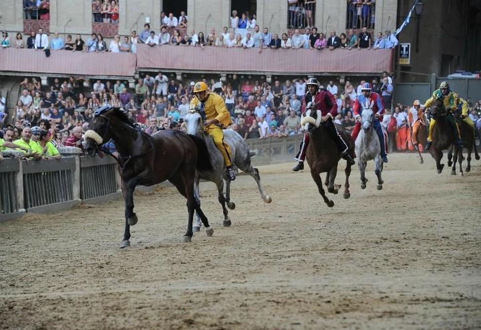 cavaloo scosso remorex guidato da Tittia