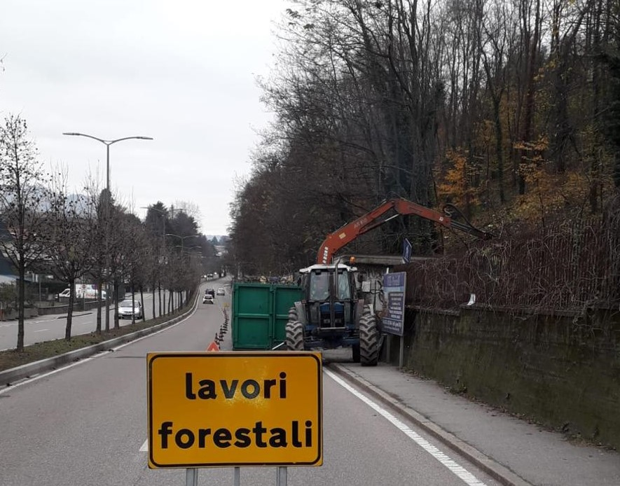 alberi viale Europa Varese