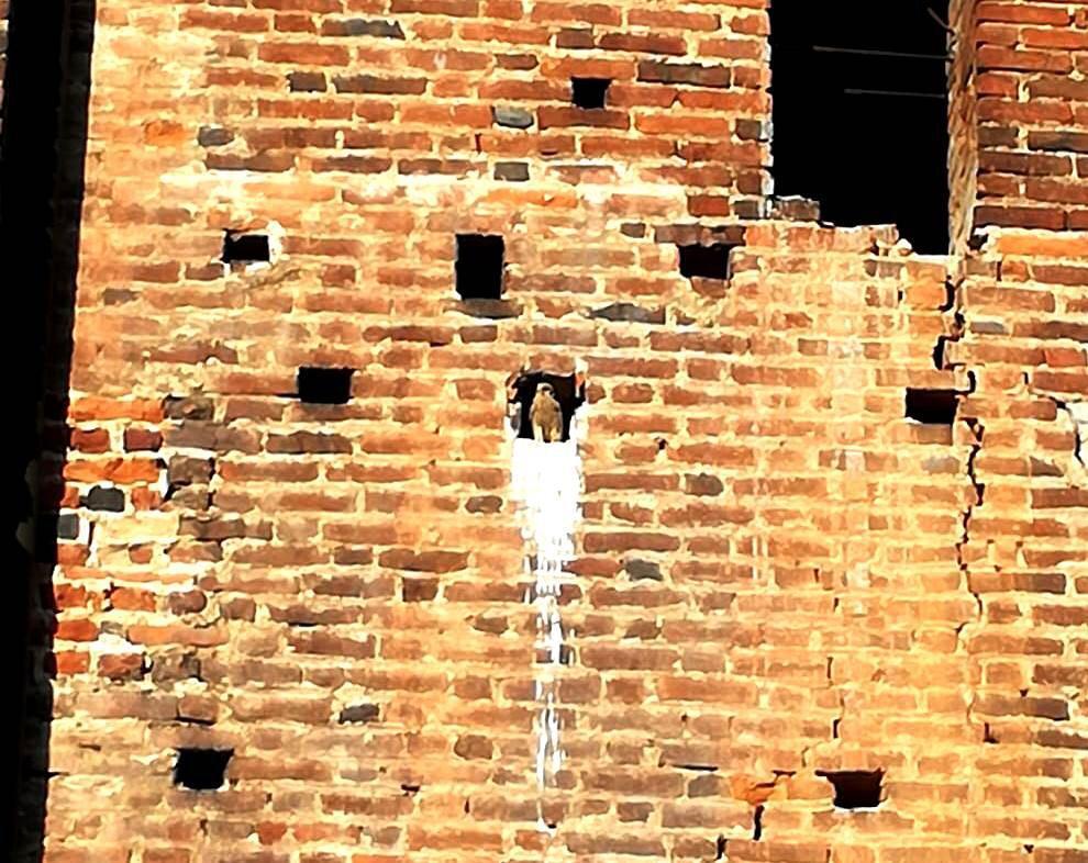 gheppio Castello Legnano