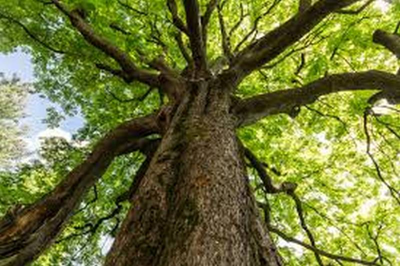 Giornata nazionale degli alberi 2020 3