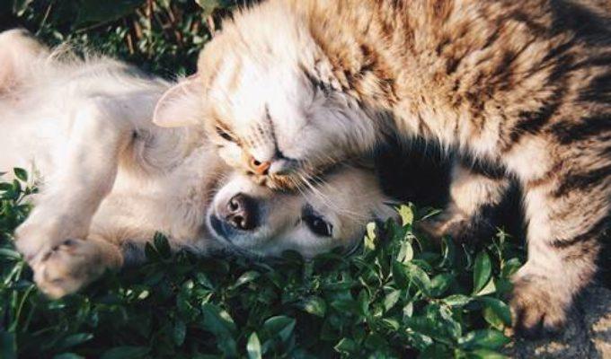 giornata mondiale diritti animali foto articolo- sempionenews