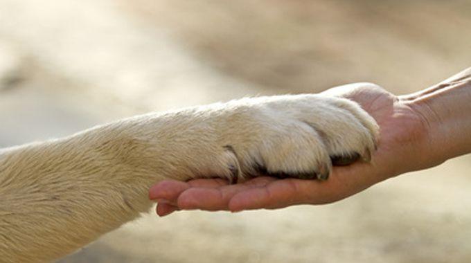 giornata mondiale diritti animali - sempionenews