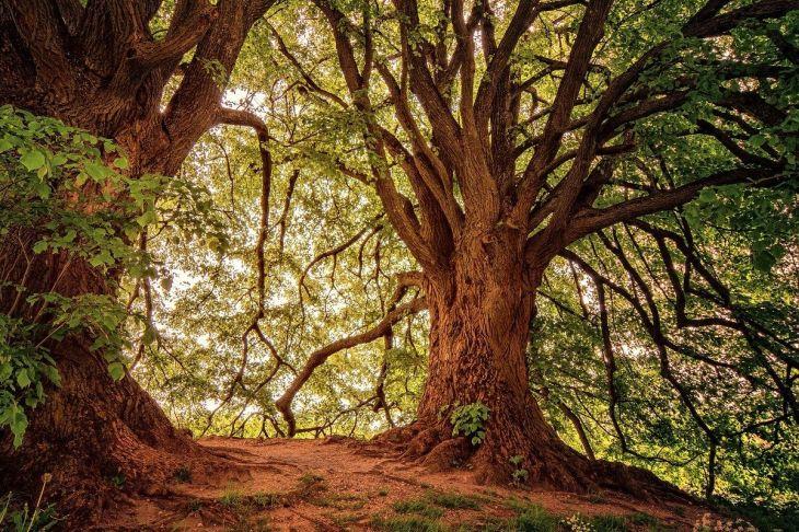alberi - foreste 1