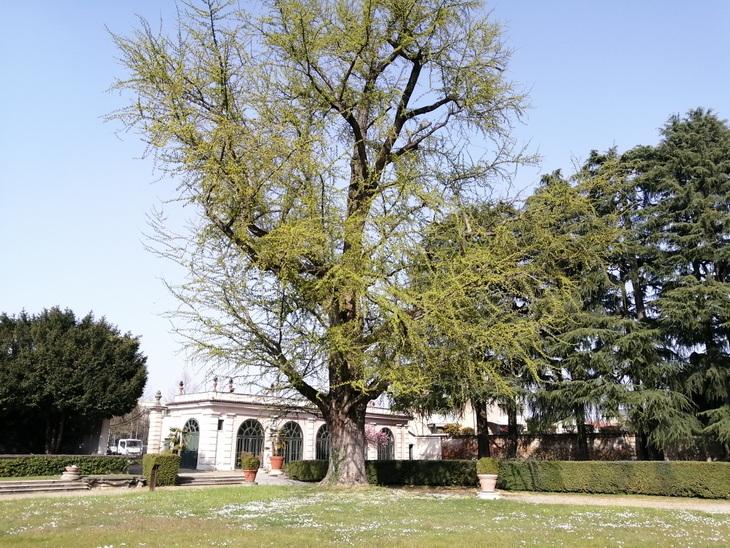 giardino storico villa litta 4